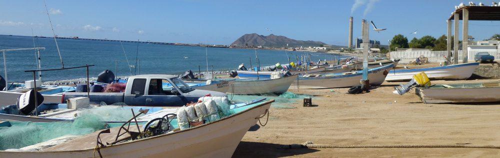 Maria del Mar Mancha-Cisneros