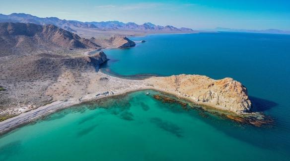 Gulf_of_California_RGI_Sargassum_Thor_Morales_02